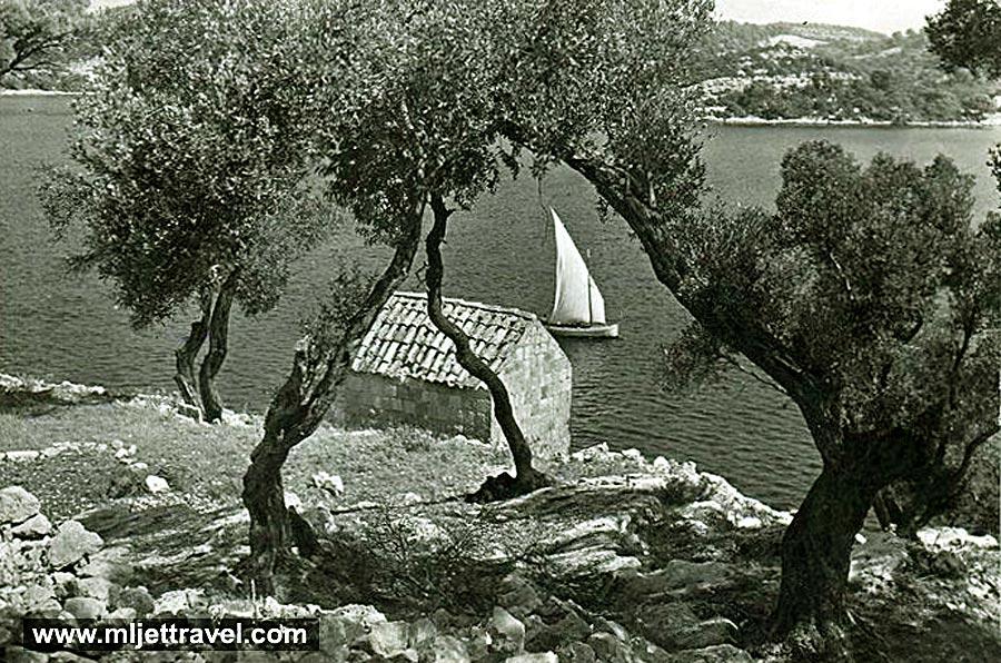 olives-boat-mljet1960s