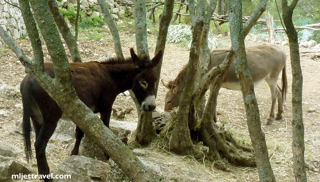 You will also see a couple of donkeys here